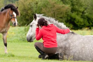 Equine-Assisted Therapy and Workshops | Vorhees Wellness Center LLC | Mascoutah, IL