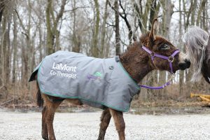 Equine Assisted Therapy | Vorhees Wellness Center LLC | Mascoutah, IL